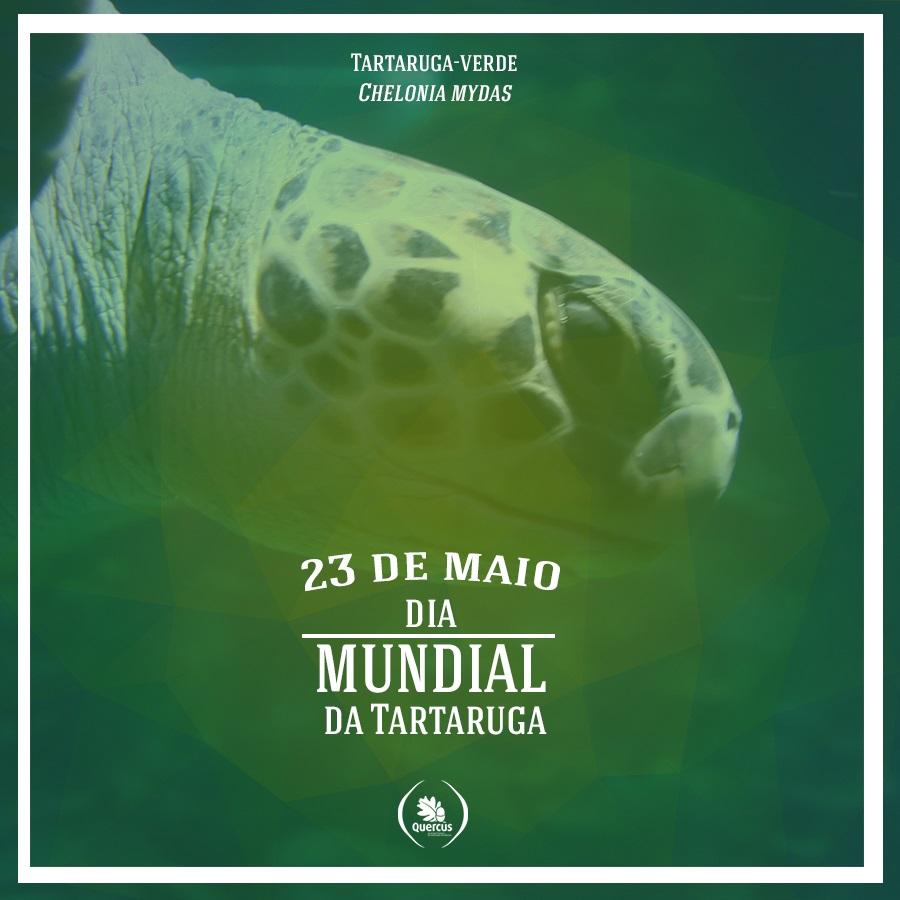 23 de maio tartaruga