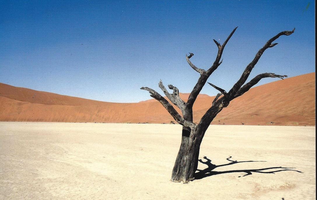 desertifacacao 9w39kd celia
