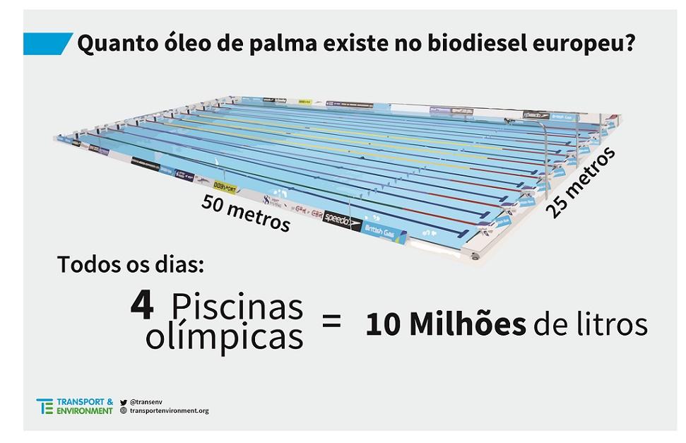 palm oil piscina 2