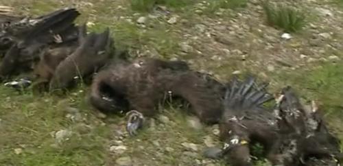 abutres envenenado tv