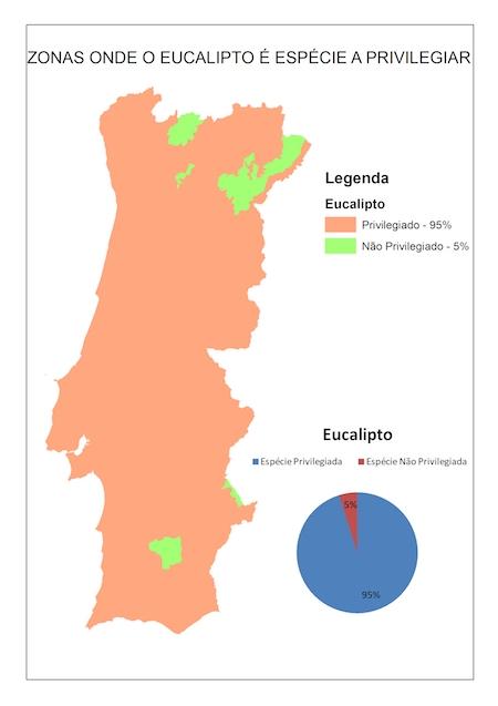 eucalipto_Portugal2.jpg