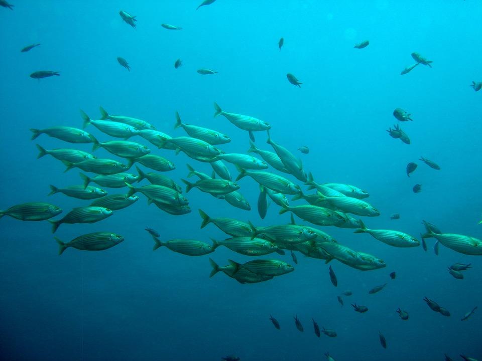 pesca comunicado